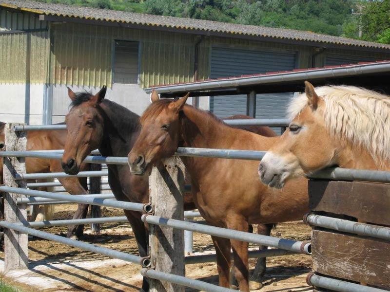 ферма Cafaggio лошади