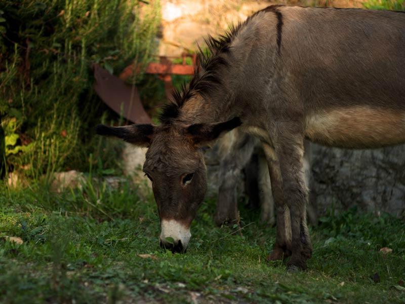 Агротуризм Тоскана осел