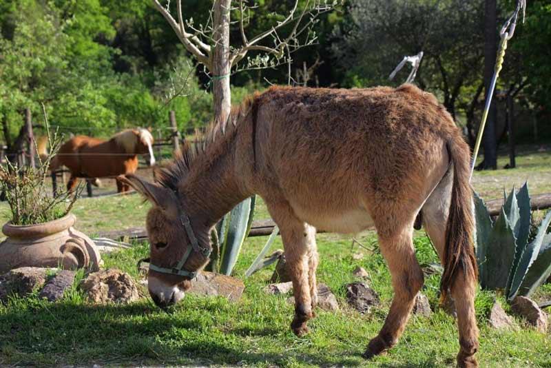 Тоскана сельский туризм осел