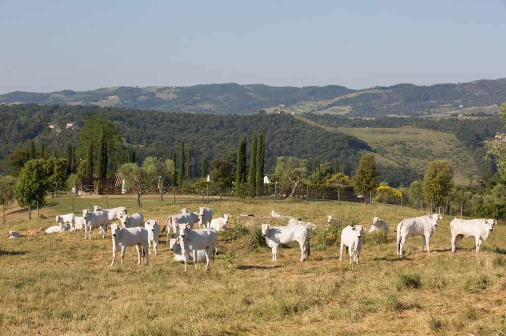 Агротуризмы и фермерские дома Умбрии